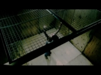 Omar severely wounded hanged by his wrists by US torturers (2)